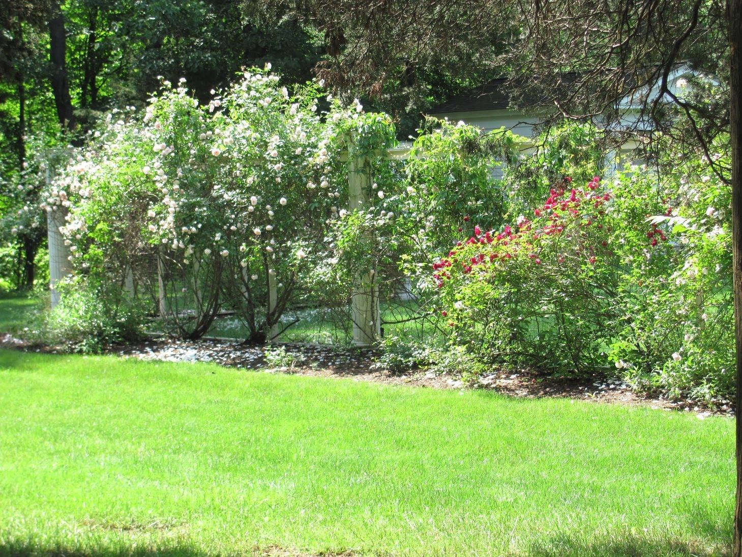 Roses Wed At Wadsworth